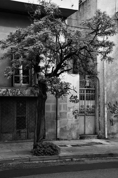 """""""The Tree"""" Tree Blackandwhite Blackandwhite Photography Streetphotography Neighborhood Map Eye4photography  EyeEm Gallery Built Structure Building Exterior Beauty In Nature Nature On Your Doorstep City Urbanphotography Malephotographerofthemonth The Week on EyeEm Athens, Greece Architecture Built Structure Building Exterior Growth Outdoors Day No People"""