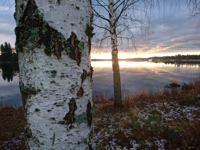 Reflection Tree Water Nature Lake Sky Outdoors Sunset Sun Growth Tree Trunk Beauty In Nature Reflection Lake Grass No People Day Lake Varpen Bollnäs Sverige Varpen Norrland November Hälsingland Middle Of Sweden