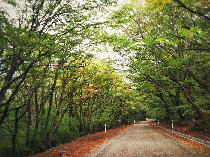 Road Autumn