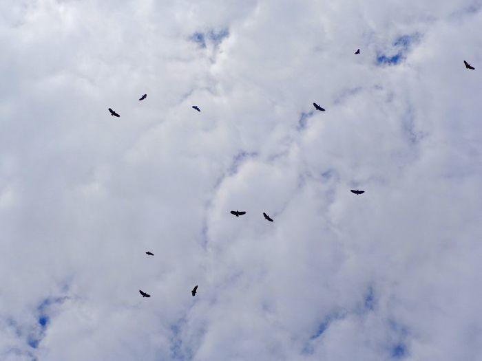 °Blackbird fly°~ Birds Sky Clouds Clouds And Sky Nature Fliying Birds