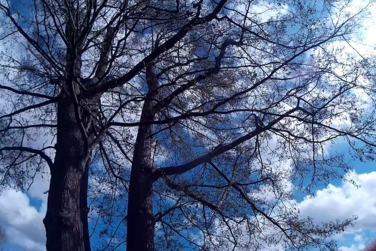 Tree Nature Blue Sky Outdoors