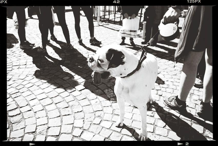 Blackandwhite Photojournalism Dog Shadows people