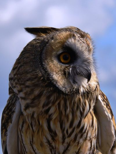 Close-Up Of Eagle Owl Outdoors