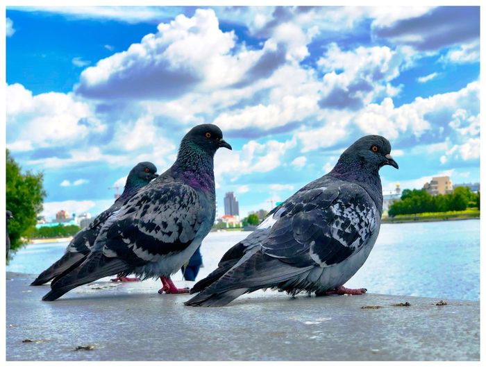 Wolken Animal Animal Themes Auto Post Production Filter Bird Close-up Cloud - Sky Day Duif Focus On Foreground Nature No People Outdoors Pigeon Sky Waterfront