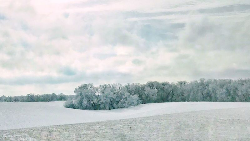 Frosted tree line plunging into snowy field. Horizontal Snowy Field Snow Cold Temperature Winter Weather Nature Tranquility Landscape Tranquil Scene Tree Beauty In Nature Cold Field Sky Frozen Cloud - Sky Snowdrift Outdoors No People Scenics Shades Of Winter