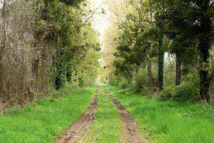 The way from and to the nature. France Beauty In Nature Day Direction Environment Footpath Forest Grass Green Color Growth Land Landscape Long Lush Foliage Nature No People Non-urban Scene Outdoors Plant The Way Forward Trail Tranquil Scene Tranquility Tree WoodLand