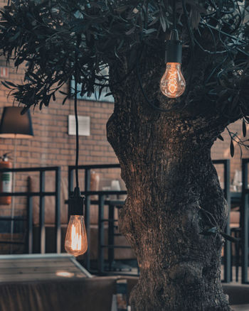 Atmosphere EyeEmNewHere Relaxing Tranquility Cafe Close-up Compositon Hanging Illuminated Lighting Equipment Peaceful Tree Tree Trunk Warm Warmth