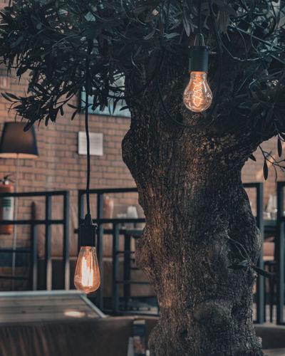 Close-up of illuminated lamp hanging on tree