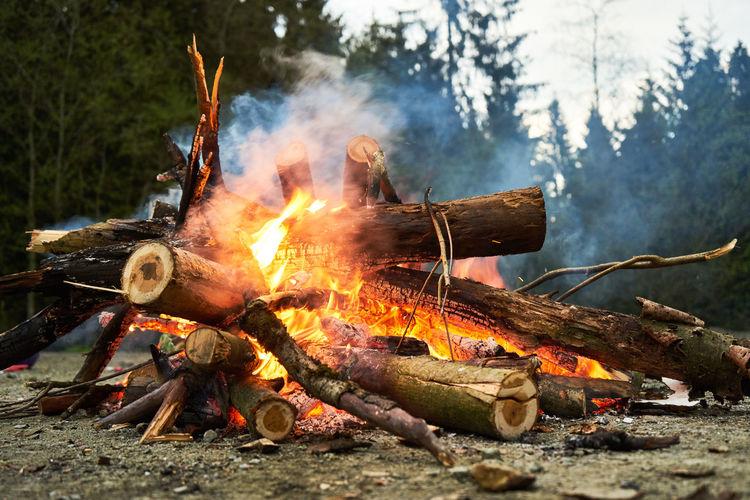 Bonfire on log in forest