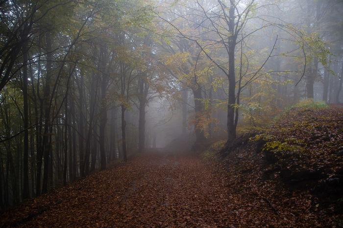 Foggy forest Autumn Canon Fall Fog Forest Misty Morning Zörk