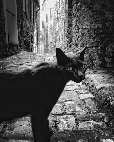 Holiday's over, I guess | #ShotOniPhone6S with Blackieapp | editing Snapseed app Domestic Animals Youmobile ShotoniPhone6s Cat BLackCat