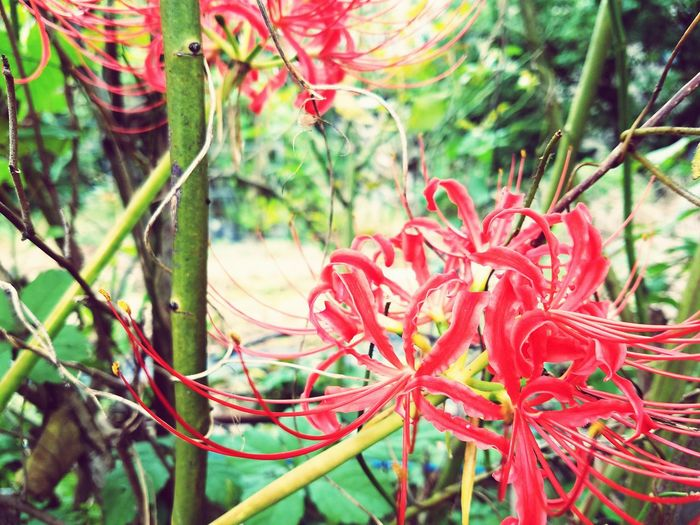 Flower Red No People First Eyeem Photo