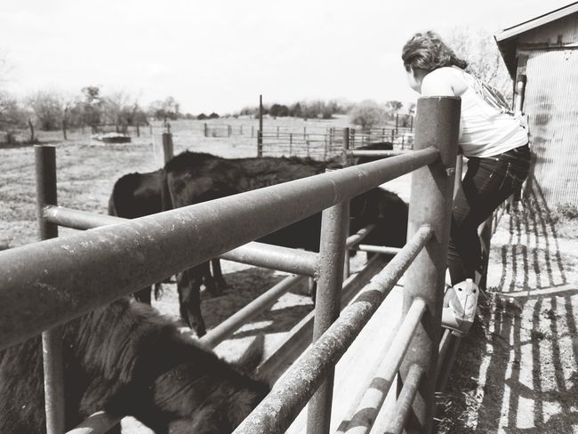 EyeEm Selects Livestock Farm Cattle Outdoors Cow Enjoying Life Outdoor Photography Outdoors Photograpghy  Kansasphotos