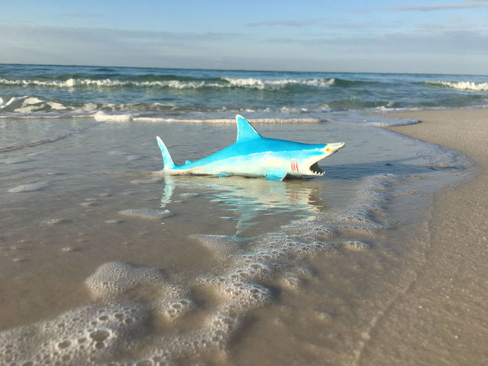 Shark on the beach Humor Animal Themes Animals In The Wild Beach Beauty In Nature Day Fish Horizon Over Water Nature No People One Animal Outdoors Sand Scenics Sea Sky Toy Water Whimsical