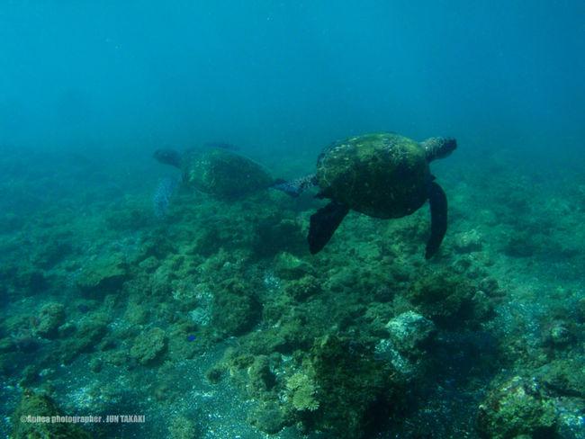 In The Sea Apnea Hachijo-island Turtle Tokyo,Japan