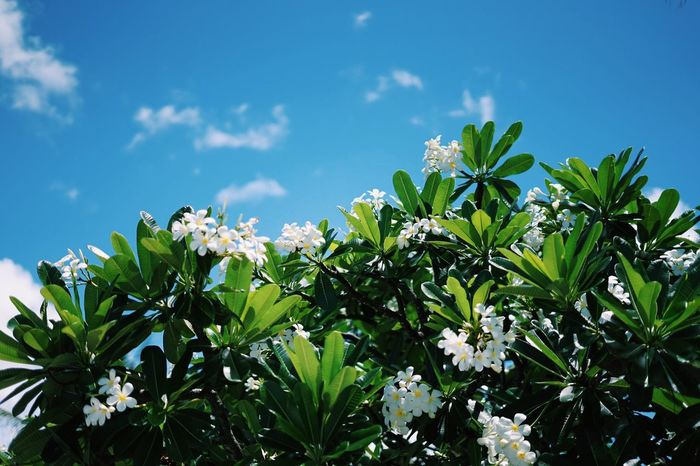Flower Leaf Nature Plant Beauty In Nature No People Sky Flower Head Beach Summer Blue Day