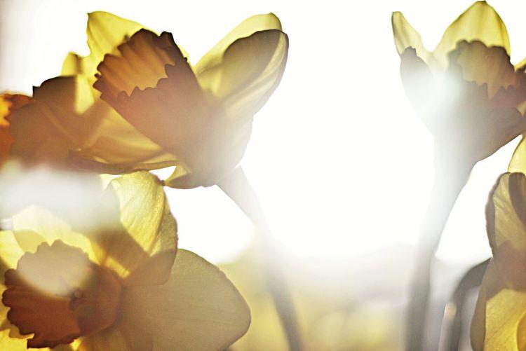 Let the sun shine Light Up Your Life EyeEm Best Shots Eye4photography  EyeEm Best Shots - Flowers
