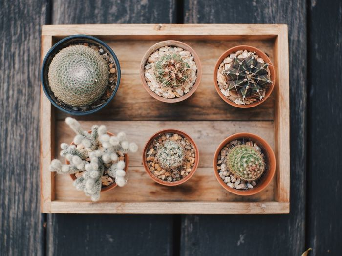 Vintage cactus in small flowerpots, rustic wood background, select and soft focus. Garden Flowers Garden Cacti Plant Cactuslover Cactus Collection Cactus Garden Cactus Flower Cactus Indoors  High Angle View Wood - Material No People Freshness Herb Visual Creativity