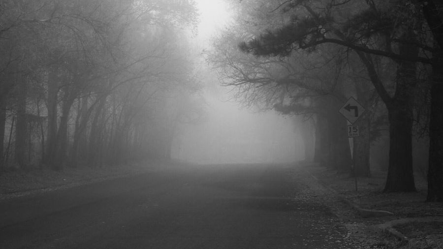 Black And White Friday Tree Fog The Way Forward Nature Branch Outdoors Mist Tranquility Day Beauty In Nature Bare Tree No People Scenics Tree Trunk Landscape Autumn Forest Winter