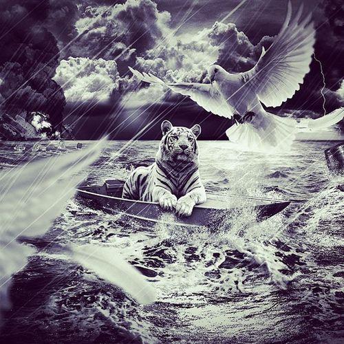Tiger Pigeon Water Sea Feathers Black White Explocion Boat Barrel Clouds Tomenta  Thunder Lightning Day darkBoatdestruction Beng Al Tiger Bird Tues Reveld Surf Foam Like goodlike4likeloveinstafollowinstalikefollow