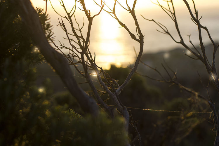 Sunrise on the Great Ocean Road Australia Branches Beauty In Nature Branch Close-up Field Focus On Foreground Growth Land Nature No People Ocean Outdoors Plant Scenics - Nature Selective Focus Sky Sun Sunlight Sunrise Sunset Tranquil Scene Tranquility Tree