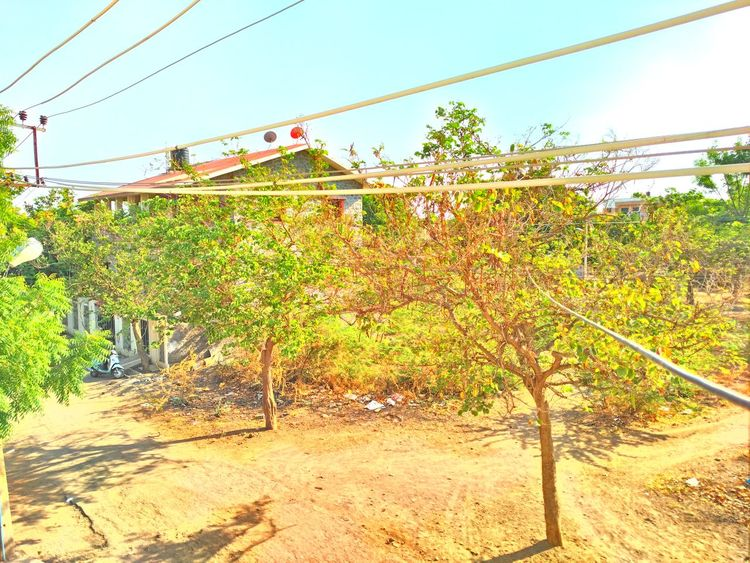 :-) Cable HDR HDR Collection Landscape No People Sunlight Sunny Tree