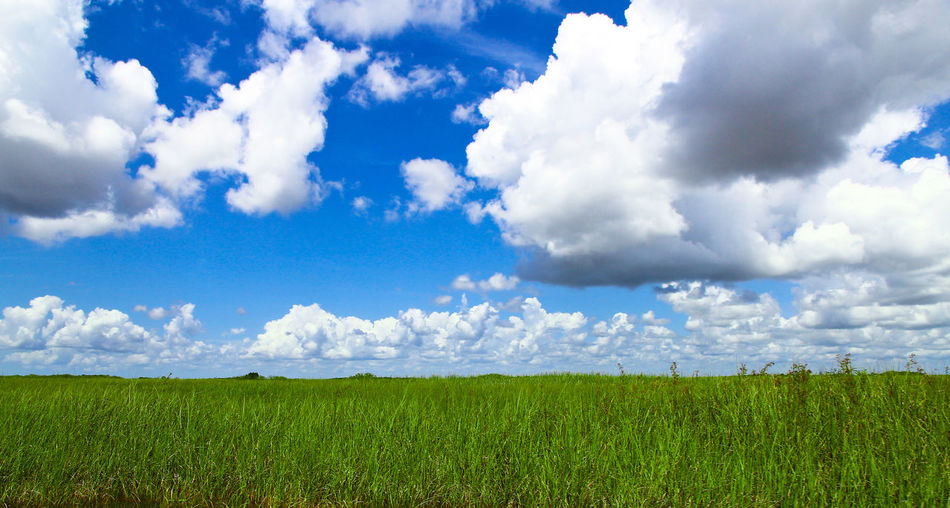 Everglades park