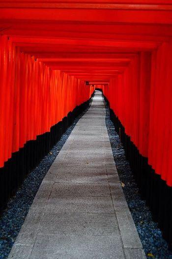 京都 Scenics 세계 Nikonphotography Nikon Snapshot Snap Walking Around Kyoto Fushimi Inari Shrine 鳥居 Red Cultures Travel Destinations Religion Shrine Spirituality Tourism Tradition Built Structure The Way Forward No People Day Architecture Colour Your Horizn EyeEmNewHere