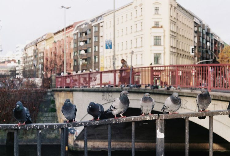 Birds perching on railing in city against sky