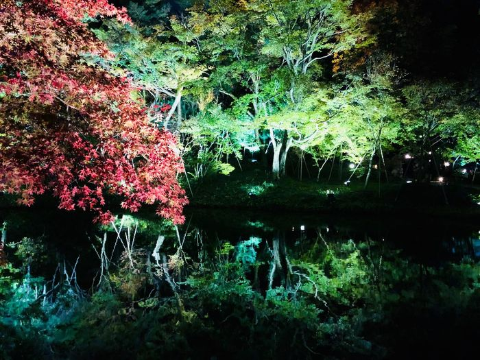 L4l Light Up Kyoto,japan Kodaiji Japan Kyoto Travel Photography Like4like Memory Plant Growth Tree Nature No People Water Beauty In Nature Green Color