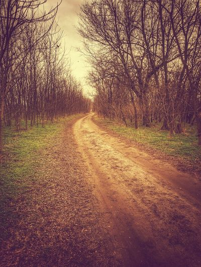 Dirt road amidst trees and plants against sky