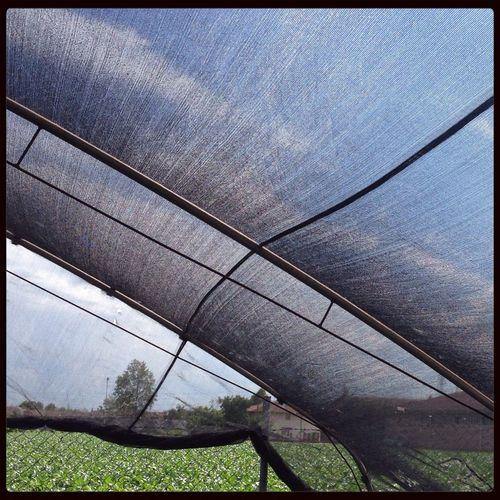 Filmy landscape Paesaggio Paesaggio Agrario Rural Landscape Nursery Garden