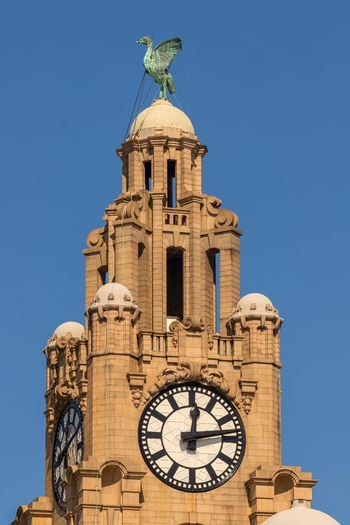 Liver birds Liver Birds Liver Building Architecture Liverpool Liverpool Waterfront Sky Architecture Built Structure Time Clock Building Exterior Clear Sky Tower Low Angle View Building Tourism History The Past Clock Tower Blue Travel Destinations