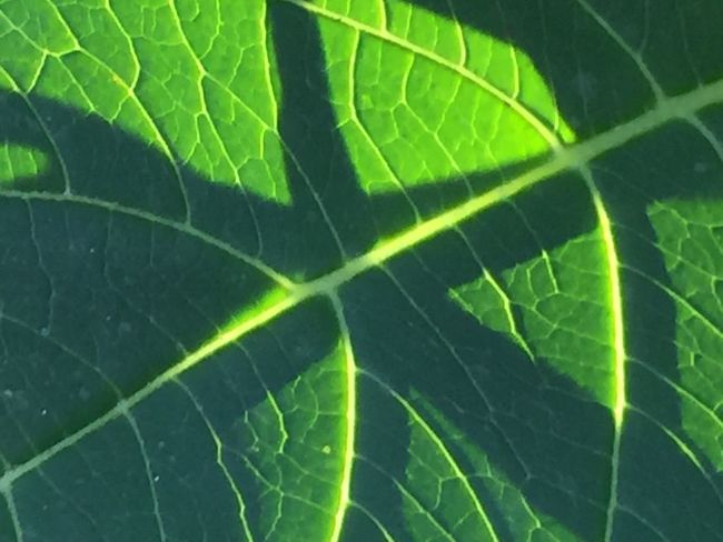 Abstracted Leaf Vein