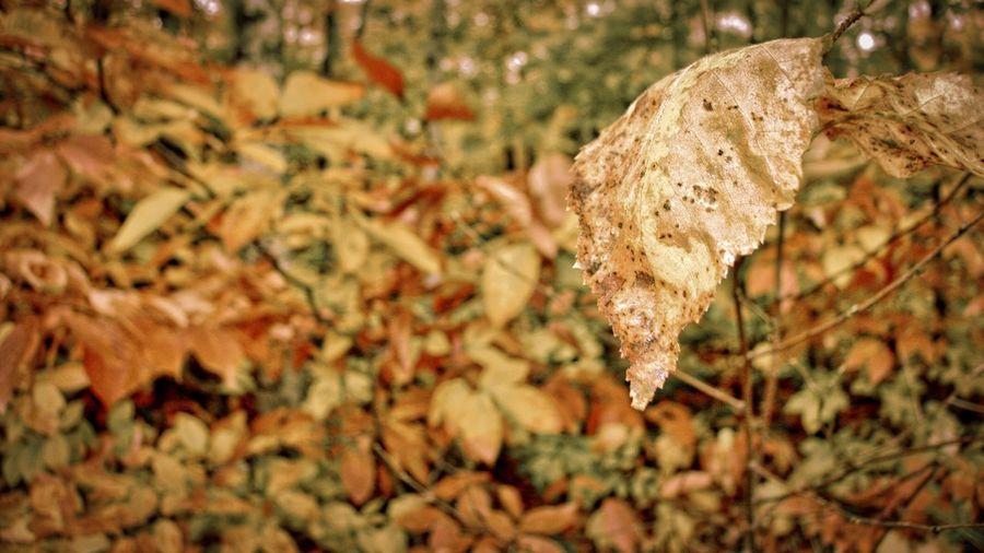 Close-up of autumn leaf on tree
