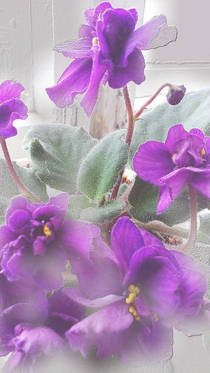 Violet By Motorola Hi!