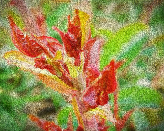 Digital Painting Digital Art Bourgeons Flowers,Plants & Garden