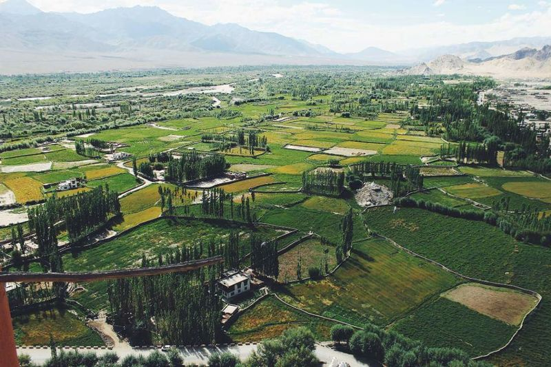 The View From Above Agriculture Rural Scene Farm Green Color Field Beauty In Nature Landscape Nature Aerial View Scenics Tranquility Patchwork Landscape Outdoors Tree Day No People Sky Leh Ladakh Thiksey Thiksey Monastery