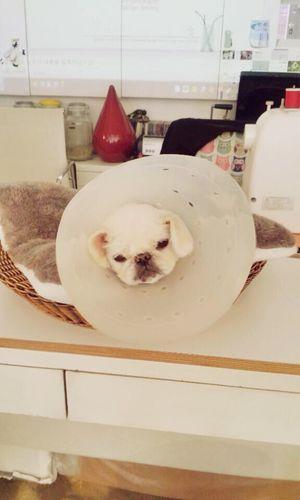 못생겼눈데 귀여웠던 강아지. 꼬깔콘쓰고있던.. Dog Cute Pets