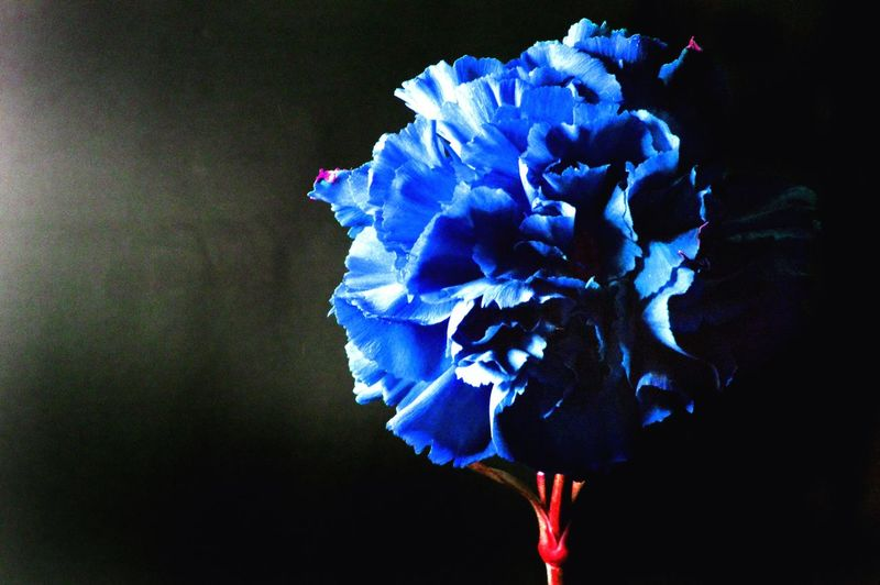 Sidelight Light And Shadow Flowers Blue Rule Of Thirds Photography Student Firstyear Structured Sharp Follow4follow Like4like