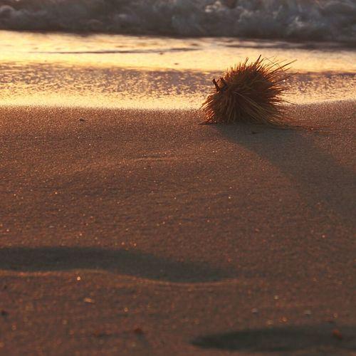 Caught my eye on the beach Sand Beach Outdoors Sunset Beach View Beach Sunset Beachphotography Beach Photography