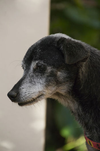 Dog Animal Beautiful Black Black Dog Cachorro Cao Cute Dog Dogs Of EyeEm Old Old Door Perrito Pet Pet Photography  Puppy