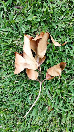 bouquet of leaves Dried Leaves Grass Lawn Pruned Trig Brown Leaves Leaves On The Ground Fallen Leaves