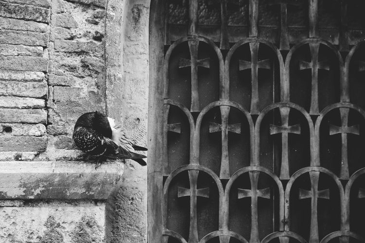 Black And White Friday Built Structure Architecture Brick Wall Window Bird City Street City Center Birds_collection Dove Doves, Birds Pigeon Pigeon Bird  HUAWEI Photo Award: After Dark The Art Of Street Photography
