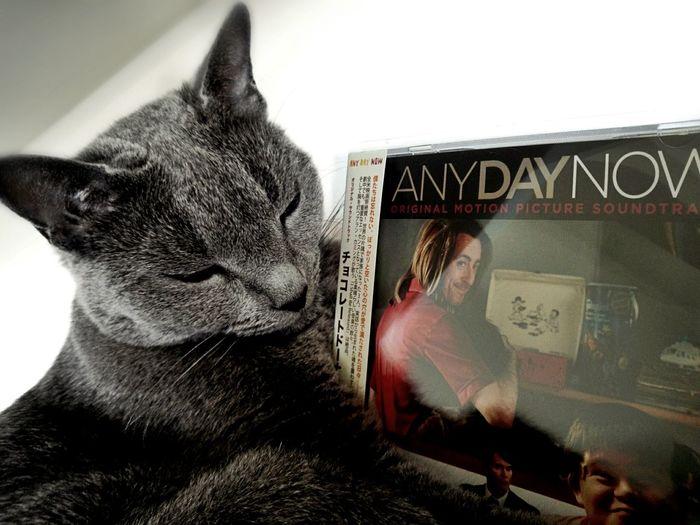 チョコレートドーナツ/Any Day Now。サントラって久々に購入したかも。 Soundtrack Cat Russian Blue MOVIE