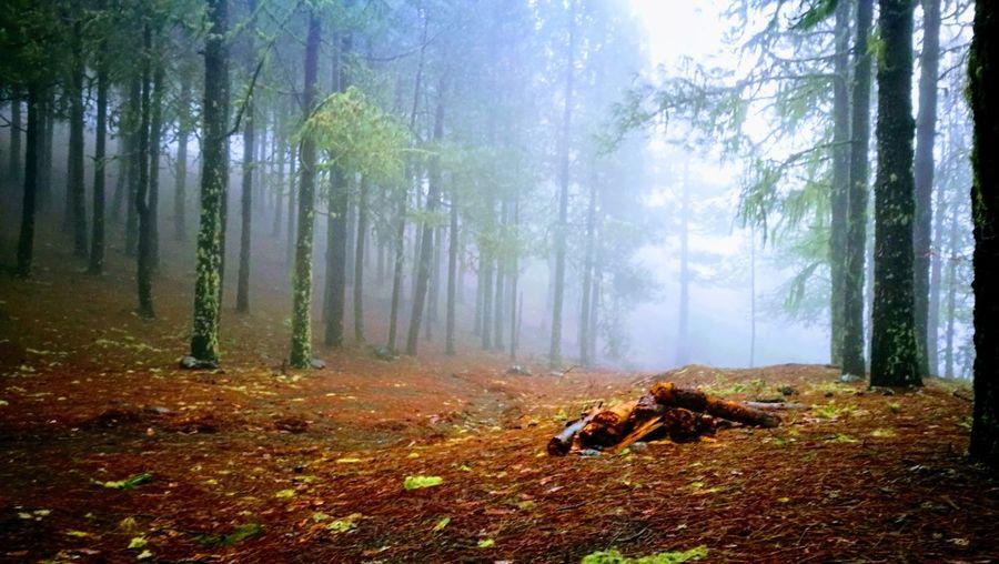 Autumn Forest Leaf Tree Nature Dog WoodLand