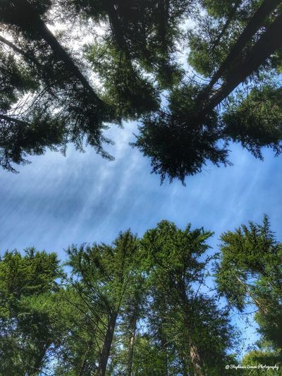 Looking up Tree Plant Sky Beauty In Nature Tranquility Growth Cloud - Sky No People Nature Day Tranquil Scene Scenics - Nature Forest Low Angle View Green Color Land Outdoors