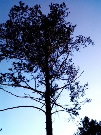 Tree Nature Sky Day Beauty In Nature