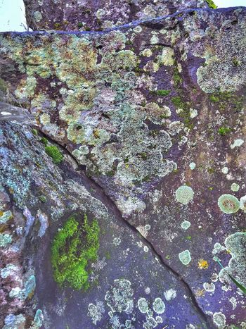 Moss & Lichen Landscape Outdoors Growth Nature Textured  Close-up Beauty In Nature Backgrounds Tranquil Scene Patterns In Nature Scenic Stone Moss Abstract Nature View Textured  Perspective (null)Abstractions Weathered Shapes In Nature  Natural Condition Views Scenics