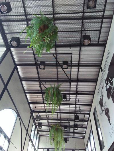 Greenhouse Tree Architecture Built Structure Plant